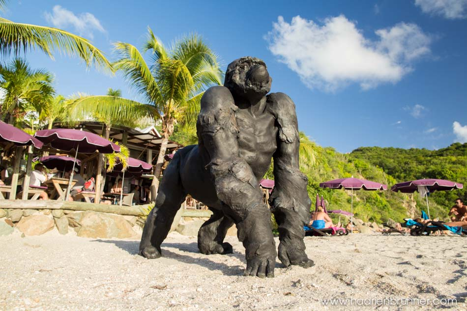 Gorille-saint-barth-Moh
